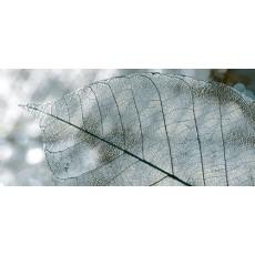 Декор Magia серый  23*50 Д61071