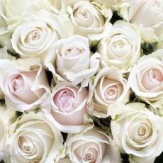 Фотообои Белые розы DECOCODE 31-0412-FE (300х280 см)