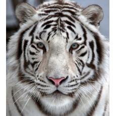 Фотообои Белый тигр DECOCODE 31-0006-NB (300х280см)
