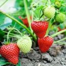 Для ягод