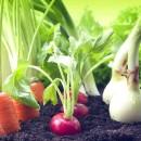 Удобрения для овощей